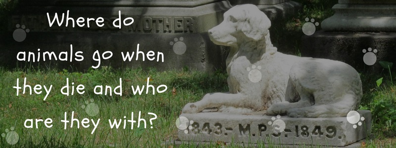 Where do animals go when they die and who are they with-